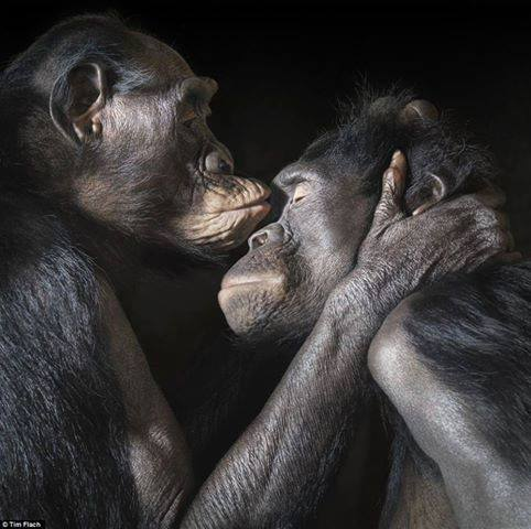 Tim Flach, love (from Hans Okker)
